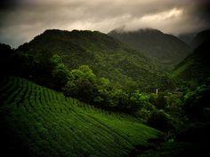 Pinglin, Taiwan - emerald tea fields and bike paths#travel #taiwan http://exploretraveler.com