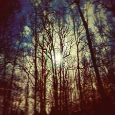 Full Moon Photography Night Sky Print woodland by CarlChristensen
