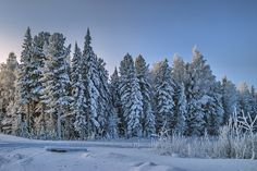Западная Сибирь Тайга