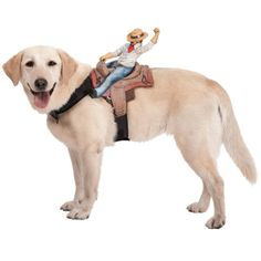 Funny Costume- I want this for my dog. People already tease that he is a horse, now they cant say he lost his saddle LoL