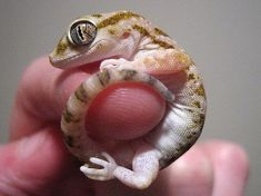 AHHH I WANT ONE OF THESE LITTLE GUYS :]