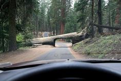 http://my.mail.ru/community/konhy/photo/_groupsphoto/91.html    California, Big Trees