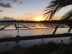 Salt Pans on Les Salines Pilot Black River, just before Sundown taken by Dee Kevan June 2016