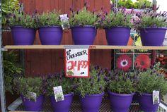 Planter Pots, Products, Gadget, Plant Pots