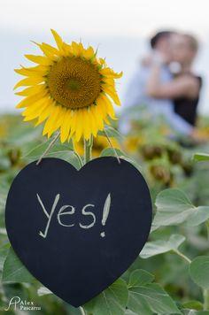 Sunflowers engagement Engagements, Sunflowers, Photo Sessions, Engagement Photos, Engagement Pics, Engagement, Engagement Shoots, Engagement Pictures, Sunflower Seeds