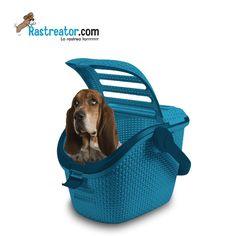 Mira qué mono Rastreator, que lleva a sus nenes bien protegidos en el coche....Para saber un poco más de sistemas para llevar a tu mascota en el coche http://blog.rastreator.com/viajar-con-nuestra-mascota-segura-en-el-coche/
