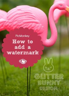 Learn three ways to claim your artistry by adding a watermark on your photos with PicMonkey.