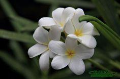 Virgin Islands Flower | Where to Eat on St. John, US Virgin Islands?