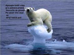 Climate change will increase long-term tourist flows . - Due to climate change, tourist flows will change in the longer term. Polar Bears In Canada, Polar Bears Live, Polar Bear Video, Greenland Ice Sheet, Arctic Ice, Social Proof, Sea Level Rise, Strange Photos, Crazy Photos