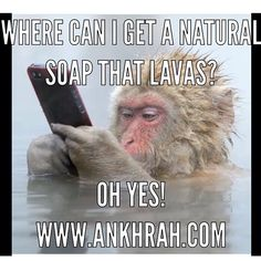 CocoMoringa cleanse bar 100% natural, even the animals know this!. Laughing is good for you health, to smile relaxes muscle & eases tension!. Keep smiling today & check out our amazing Moringa Soap bar. For more info, Healthy Living Guides, Recipes, Tips & Secrets visit Ankhrahhq.blogspot.co.uk . Improve your lifestyle today!!! . #CocoMoringa #soaps #moringa #organic