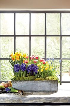 Bring Spring Indoors - Indoor Container Gardening Ideas - Southernliving. Here, we've paired an assortment of popular bulbs with an industrial-style galvanized-metal container you might find at a flea market, antiques store, or online. Search local garden centers for inexpensive forced bulbs. Select small pots of individually forced bulbs, or look for large pots with multiple blooms for dividing. Make sure to buy healthy, firm bulbs with tightly closed buds. Pack bulbs closely to intensify…