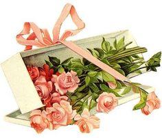 Rosas na caixa, cartão postal.  -