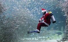 A Korean Santa diver swims with sardines at the Coex Aquarium in Seoul, South Korea.