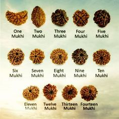 A Rudraksha beads has various physical and mental benefits. There are many ways to check the authenticity of a Rudraksha, but it is best for the human Hindu Rituals, Hindu Mantras, Vedic Mantras, Rudra Shiva, Mahakal Shiva, Lord Shiva Mantra, Shiva Linga, Shiva Tattoo, Shiva Lord Wallpapers