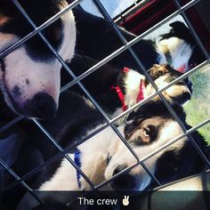The crew  #BorderCollieFamily #BorderColliePack #LandRoverDefender #Copper #Trouble #Bailey #Megan #CopperHopper #TroubleButt #BaileyBoy #MeggersBeggers #TripToTheBeach #LoveThemAll #HappyDays #FamilyDays #SnapChatMuch by caliiimarieee The crew  #BorderCollieFamily #BorderColliePack #LandRoverDefender #Copper #Trouble #Bailey #Megan #CopperHopper #TroubleButt #BaileyBoy #MeggersBeggers #TripToTheBeach #LoveThemAll #HappyDays #FamilyDays #SnapChatMuch