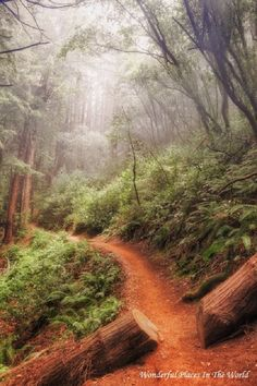 Misty Morning Trail at Muir Woods National Monument, CA, USA