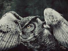 Owl Portrait IV (30x40, Acrylic, 2015)