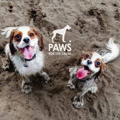 2015 Paws Calendar – Paws for the Cause Best Gifts, Calendar, Cute Animals, Pure Products, Dogs, Wellness, Health, Pretty Animals, Health Care
