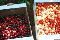 love the fresh fruit all summer long...