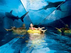 Atlantis underwater hotel in Dubai  Shark-infested lagoon (er, tank)    After being catapaulted down the Leap of Faith, Aquaventurers bob in inner tubes through a 'shark-infested lagoon'. Fortunately the sharks are safely on the other side of a pane of glass.