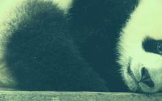 Google Panda e l'aggiornamento killer: ecco i siti web penalizzati #google #panda #seo