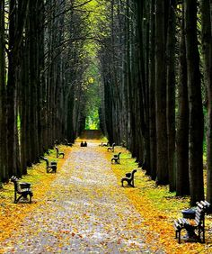 Minsk, Belarus / by ayhan a. birlik Just love this avenue of trees and seating. The Places Youll Go, Places To See, Republic Of Belarus, Week End En Amoureux, Hallstatt, Innsbruck, Neuschwanstein, Madrid, Vladimir Putin