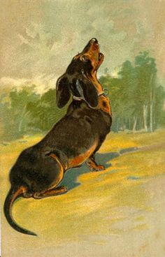 Dachshund Clube I love a doxie's howl. Vintage Dachshund, Arte Dachshund, Dachshund Love, Daschund, Delphine, Weenie Dogs, Scottish Terrier, Otter, Comics