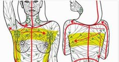 """The truth is, most people have never heard of lymphatic drainage or even the lymphatic system. This is because it is not often talked about, however, in 2012 researchers at USC made this statement: """"… the lymphatic system is no less essential than the blood circulatory system for human health and well-being."""""""