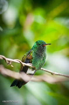 Rare sight....Hummingbird sitting stil.