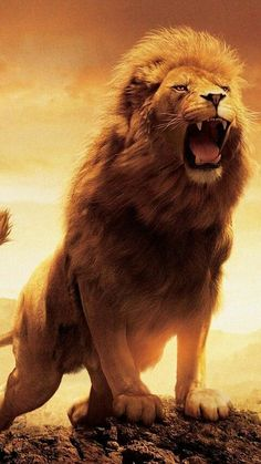 Picture of The Lion Roaring In Hilltop Case for iPhone 6 PC Material Transparent Lion Wallpaper Iphone, Watercolor Wallpaper Iphone, Cat Wallpaper, Wallpaper Pictures, Animal Wallpaper, Computer Wallpaper, Nature Wallpaper, Iphone Wallpapers, Full Hd Wallpaper Android