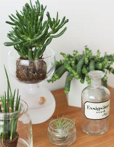 Urban Jungle Bloggers: Plants & Glass by @23qmStil