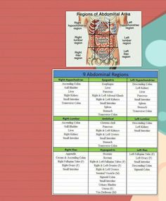 9  abdominal quadrants with with location of orgAns in each region #gain#practical#knowledge