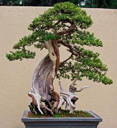 Image from http://2.bp.blogspot.com/-aQz3VZSJ-xo/UibbYmqs2BI/AAAAAAAADRA/jdoZzdvNDs0/s1600/bonsai+root+enrich.jpg.