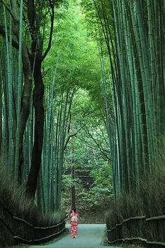Bamboo path in Sagano, Kyoto, Japan Japan Trip, Japan Japan, Go To Japan, Japan Travel, Japan Sakura, Places Around The World, Kyoto Garden, Paris Garden, Bamboo Forest Japan