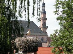 Parc à cigognes de Molsheim - #Alsace