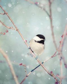 swansong-willows:  (via Chickadee in Snow No. 18 - fine art bird photography print … | pret…)