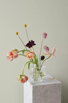 LADY Pure Color 8281 Pale Linden – et perfekt valg blant våren og sommerens farger! Flower Vases, Flower Art, Wild Flowers, Beautiful Flowers, Arreglos Ikebana, Magazine Deco, Flower Aesthetic, Planting Flowers, Floral Arrangements