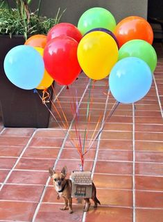 20 déguisements de chiens pour Halloween  2Tout2Rien