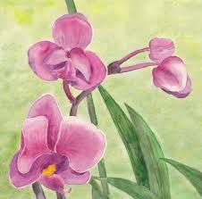 Afbeeldingsresultaat voor getekende orchidee