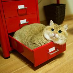Filed under C for cat. Cute Cats And Dogs, Animals And Pets, Cats And Kittens, Cute Animals, Mr Cat, Neko Cat, Orange Cats, British Shorthair, Fat Cats