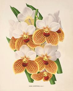 Yellow vintage Orchid Botanical Art Prints by VictorianWallArt