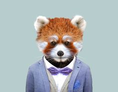 Red-Panda---Ailurus-Fulgens-copia