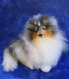 Soft sculpture Mohair dog original custom Shetland Sheepdog