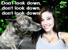 Haha, look on the dog's face is priceless!