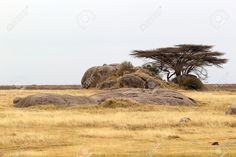 African landscape: savanna with trees and rocks Stock Photo - 23949718