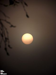 SUNRISE THROUGH THE MORNING FOG... by Richelle Desiree