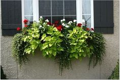 We hope our photos of flower boxes will inspire new projects and encourage gardeners who are thinking about new window box ideas to consider our extensive line of products. Description from hooksandlattice.com. I searched for this on bing.com/images