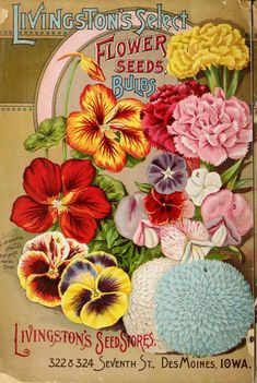 1895 Garden & field seeds ~ seed catalogue back cover. Nasturtium, carnations, sweet peas, pansies, dahlias...
