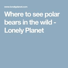 Where to see polar bears in the wild - Lonely Planet