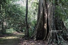 royal historical sites galuh ciung wanara...karangkamulyaan west java indonesia